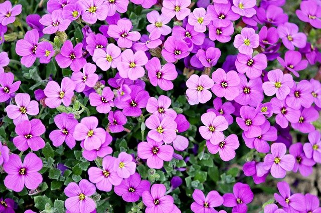 zahradní rostlina.jpg